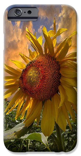 Summer iPhone Cases - Sunflower Dawn iPhone Case by Debra and Dave Vanderlaan