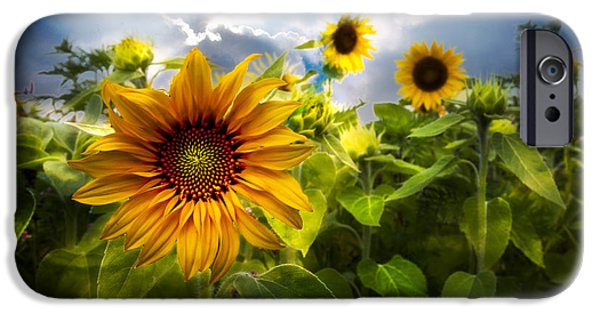 Field. Cloud iPhone Cases - Sunflower Dream iPhone Case by Debra and Dave Vanderlaan
