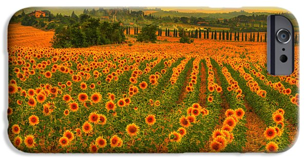 Mist iPhone Cases - Sunflower dream iPhone Case by Midori Chan