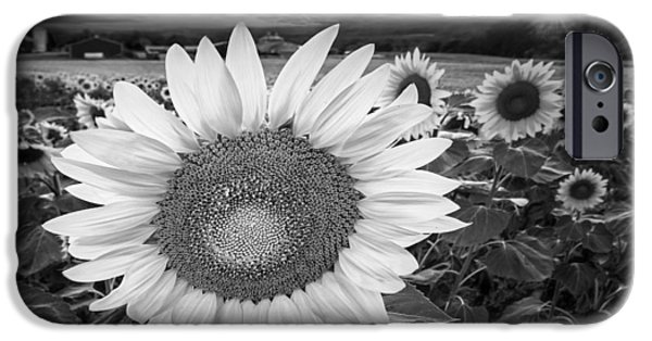 Sunflowers iPhone Cases - Sunflower Field Forever BW iPhone Case by Susan Candelario