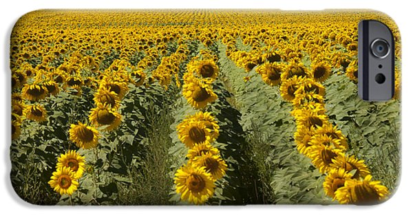 Meadow Photographs iPhone Cases - Sunflower Field iPhone Case by Juli Scalzi