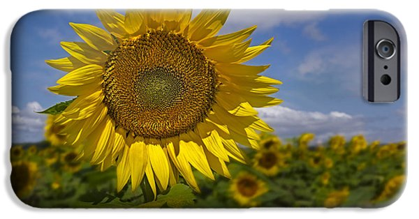 Sunflower iPhone Cases - Sunflower Field iPhone Case by Susan Candelario