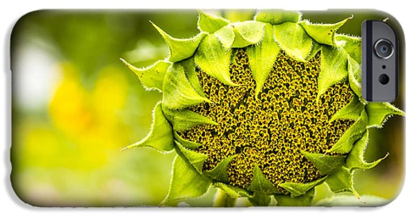 Rainy Day iPhone Cases - Sunflower Head Blooming iPhone Case by Teri Virbickis