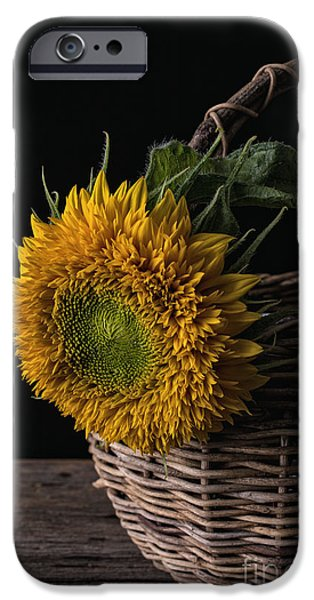 Bloosom iPhone Cases - Sunflower in a basket iPhone Case by Edward Fielding