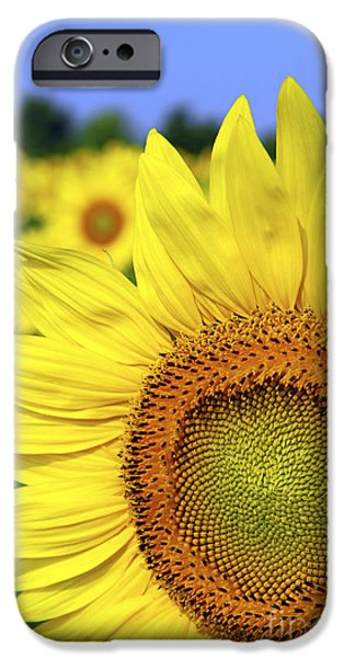 Sunflowers Photographs iPhone Cases - Sunflower in field iPhone Case by Elena Elisseeva