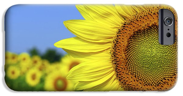 Sunflowers Photographs iPhone Cases - Sunflower in sunflower field iPhone Case by Elena Elisseeva
