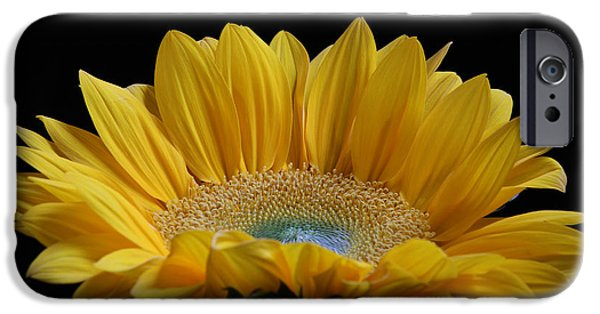 Purple Sensation iPhone Cases - Sunflower iPhone Case by Juergen Roth