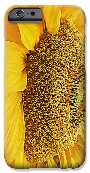 Shape iPhone Cases - Sunflower iPhone Case by Kay Novy
