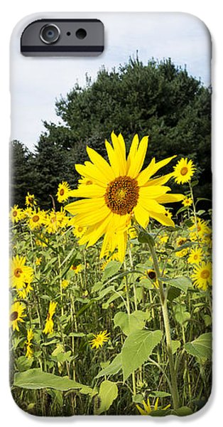 Sunflower Patch iPhone Case by Ray Summers Photography