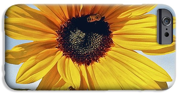 Fauna Pyrography iPhone Cases - Sunflower Pollination iPhone Case by DUG Harpster