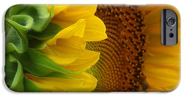 East Dennis Ma iPhone Cases - Sunflower Smile iPhone Case by Dianne Cowen
