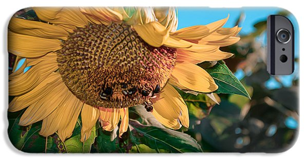 United States iPhone Cases - Sunflower Smiles iPhone Case by Cke Photo
