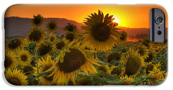 Sunflower Fields iPhone Cases - Sunflower Sun Rays iPhone Case by Mark Kiver