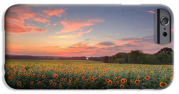Buttonwood Farm iPhone Cases - Sunflower Sunset iPhone Case by Bill  Wakeley