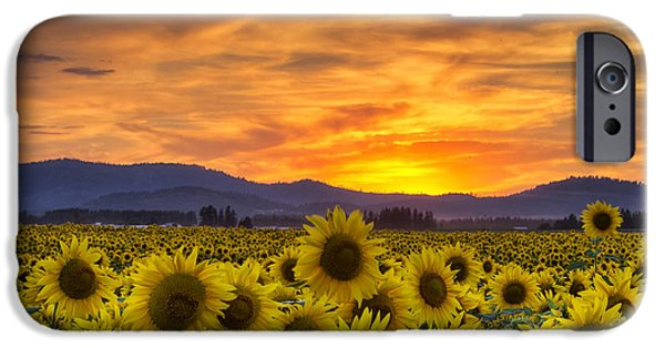 Sunflower Fields iPhone Cases - Sunflower Sunset iPhone Case by Mark Kiver
