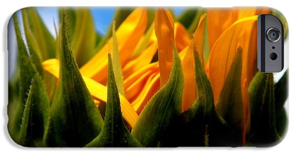 Nature Abstract iPhone Cases - Sunflower Teardrop iPhone Case by Karen Wiles