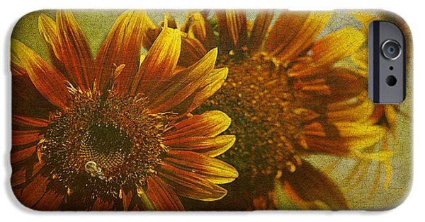 Recently Sold -  - Flora iPhone Cases - Sunflower Trio iPhone Case by Cindi Ressler