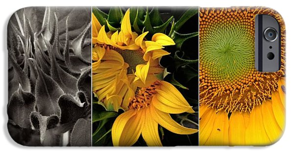 Girasol iPhone Cases - Sunflower-Triptych iPhone Case by Don Spenner