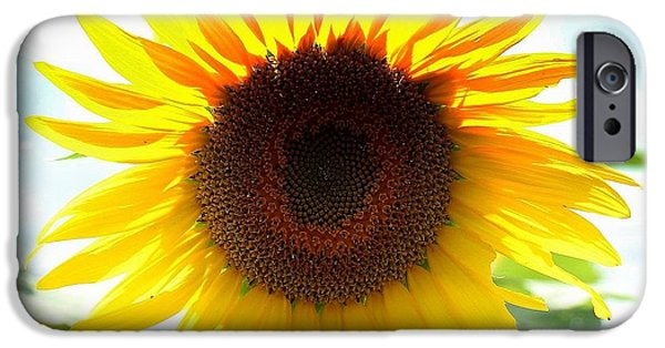 Buttonwood Farm iPhone Cases - Sunflower iPhone Case by Ursula Coccomo