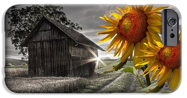Tennessee Barn iPhone Cases - Sunflower Watch iPhone Case by Debra and Dave Vanderlaan