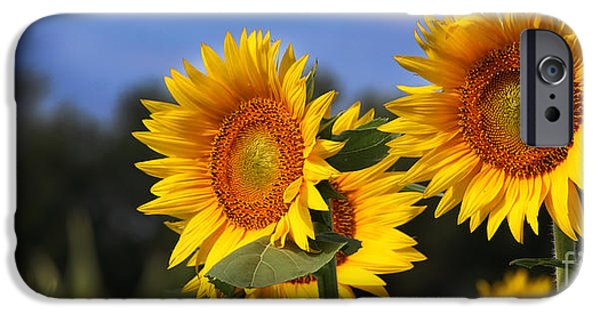 Agriculture iPhone Cases - Sunflowers-2534 iPhone Case by Gary Gingrich Galleries