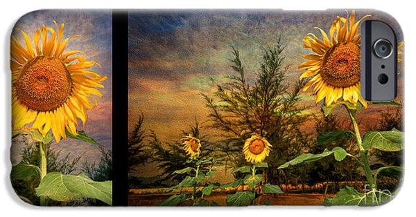 Stigma iPhone Cases - Sunflowers iPhone Case by Adrian Evans