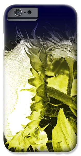 Agriculture iPhone Cases - Sunflowers at night iPhone Case by Lali Kacharava