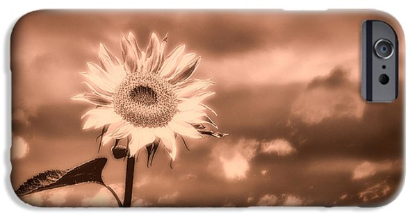 Sunflowers Photographs iPhone Cases - Sunflowers iPhone Case by Bob Orsillo