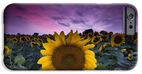 Yellow Leaves iPhone Cases - Sunflowers iPhone Case by Cale Best