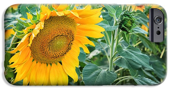Southern New England iPhone Cases - Sunflowers For Wishes iPhone Case by Bill  Wakeley
