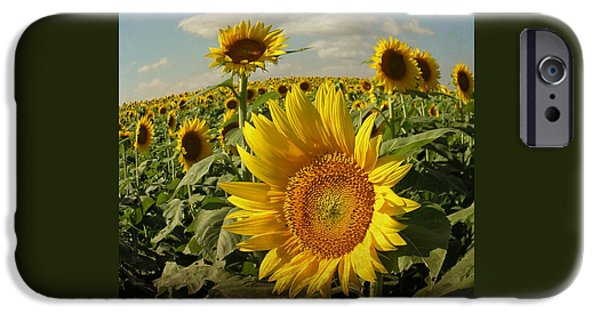 Sunflower Photograph iPhone Cases - Sunflowers in August iPhone Case by Chris Berry
