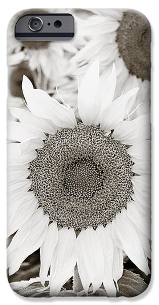 Farm Stand iPhone Cases - Sunflowers in Back and White iPhone Case by Marilyn Hunt