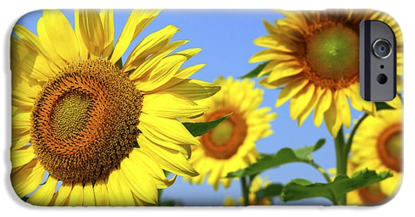 Sunflowers Photographs iPhone Cases - Sunflowers in field iPhone Case by Elena Elisseeva