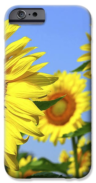 Sunflowers in field iPhone Case by Elena Elisseeva