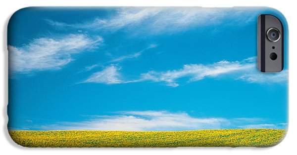 Absence iPhone Cases - Sunflowers In Field iPhone Case by Panoramic Images