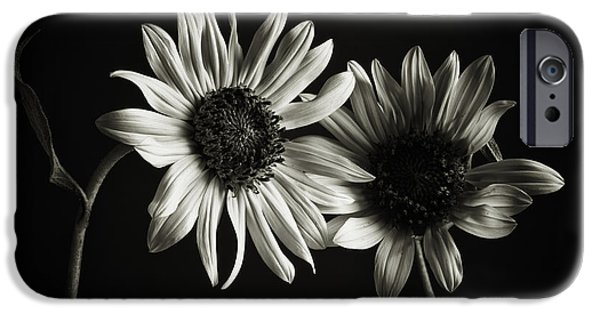 Olympus iPhone Cases - Sunflowers in Soft Light iPhone Case by Jesse Castellano