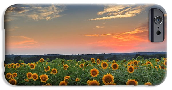 Connecticut Landscape iPhone Cases - Sunflowers in the evening iPhone Case by Bill  Wakeley