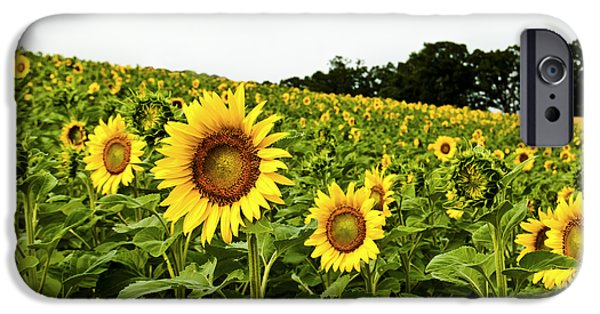 A Sunny Morning iPhone Cases - Sunflowers on a Hill iPhone Case by Christi Kraft