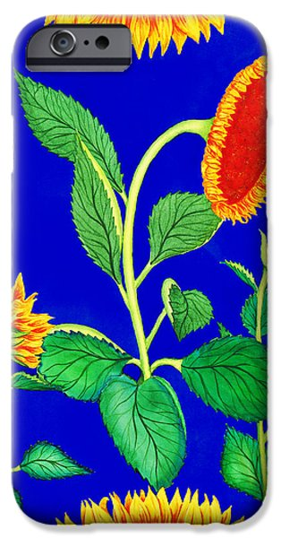 Sunflower Fields iPhone Cases - Sunflowers iPhone Case by Palmer Stinson