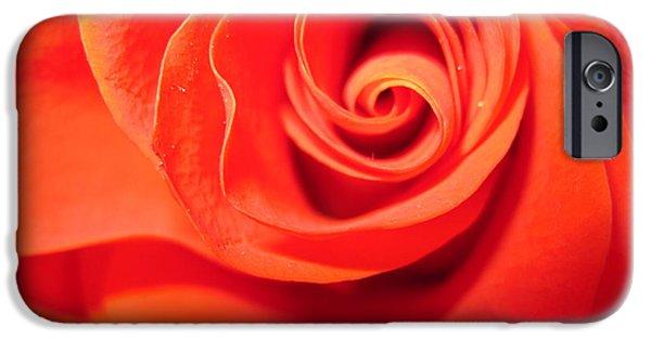 Flora Drawings iPhone Cases - Sunkissed Orange Rose 1 iPhone Case by Tara  Shalton