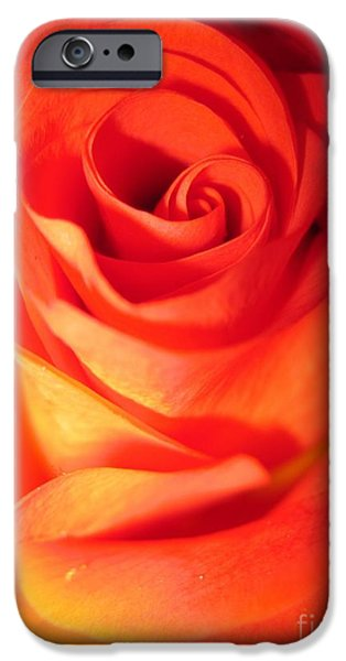 Flora Drawings iPhone Cases - Sunkissed Orange Rose 10 iPhone Case by Tara  Shalton