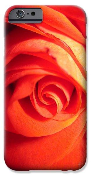 Flora Drawings iPhone Cases - Sunkissed Orange Rose 11 iPhone Case by Tara  Shalton