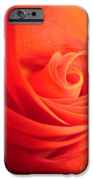 Flora Drawings iPhone Cases - Sunkissed Orange Rose 14 iPhone Case by Tara  Shalton