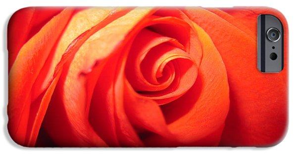Flora Drawings iPhone Cases - Sunkissed Orange Rose 4 iPhone Case by Tara  Shalton