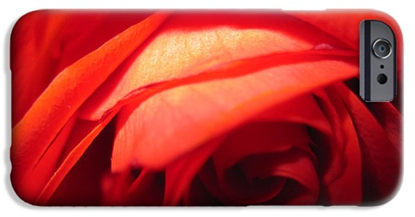 Flora Drawings iPhone Cases - Sunkissed Orange Rose 5 iPhone Case by Tara  Shalton