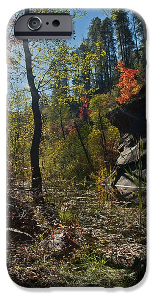 West Fork iPhone Cases - Sunlight at West Fork iPhone Case by Brian Lambert