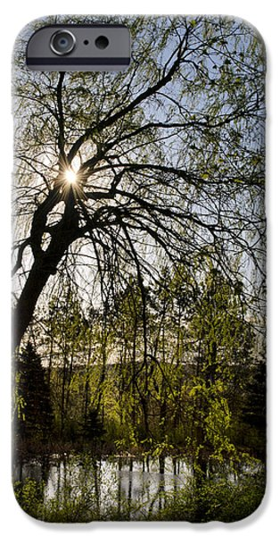 Weeping Willow Tree iPhone Cases - Golden Sunlight Through Green Tree iPhone Case by Christina Rollo