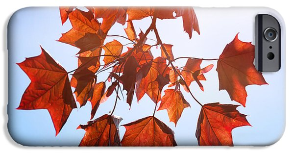 Tree Art Print iPhone Cases - Sunlight on Red Leaves iPhone Case by Natalie Kinnear