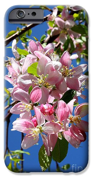 Cherry Blossoms iPhone Cases - Sunlight on Spring Blossoms iPhone Case by Carol Groenen