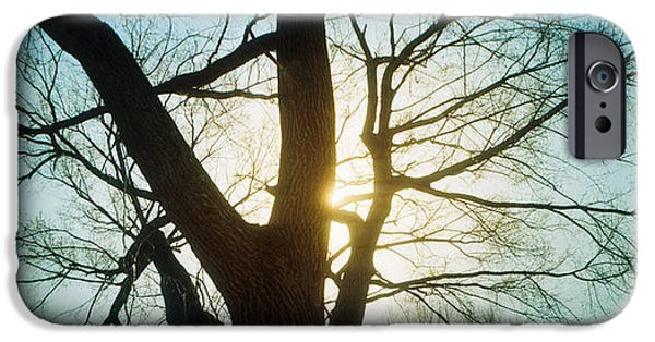 Bare Tree iPhone Cases - Sunlight Shining Through A Bare Tree iPhone Case by Panoramic Images